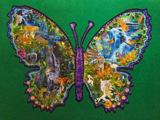 rainforest butterfly
