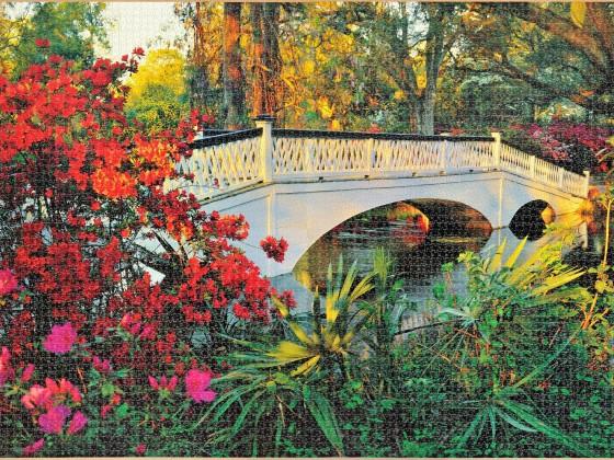 Clenemtoni - Magnolia Garden, 6000