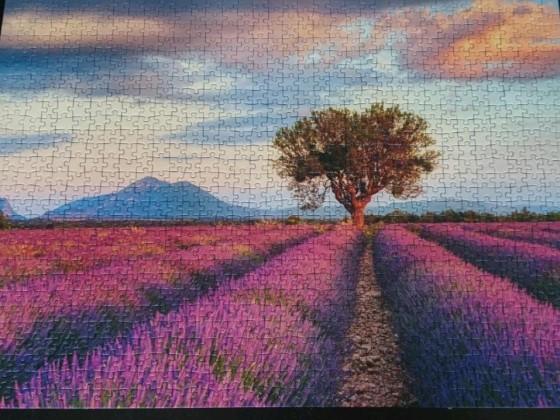 Lavendelfeld zur goldenen Stunde
