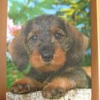 (Rauhhaardackel) 750 LIGRA 1988 Riesen Puzzle-Sortiment Nr.2810.2 604 x 404 Hoch Bestand Nr. 007 B