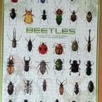 Beetles-Eurographics-1000 Teile