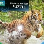 Bengalischer Tiger, 500