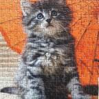 Kätzchen 1