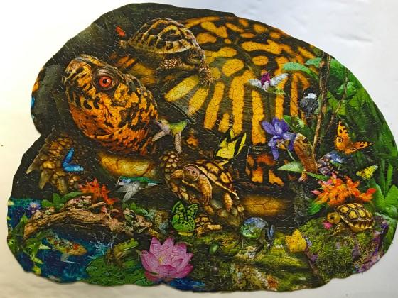 tortoise crossing