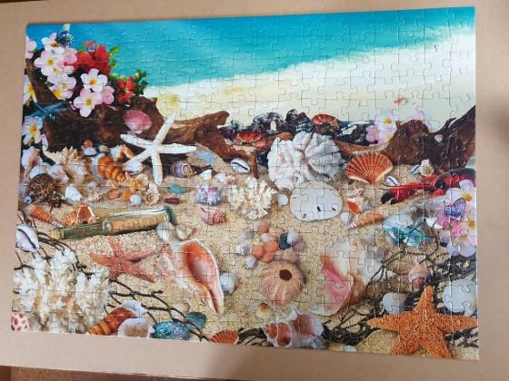 Sea Shell Seashore