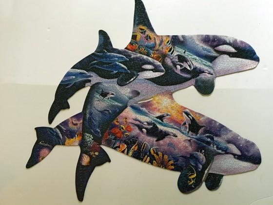 Orcas at play