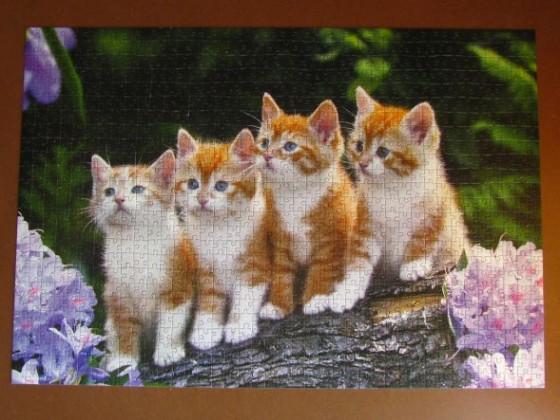 The Cat Crew1000CASTORLAND2010 - 2011PuzzleC-101344680 x 470BreitBestand Nr. 003