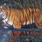 Schmidt Puzzle 1000 Teile : Tiger