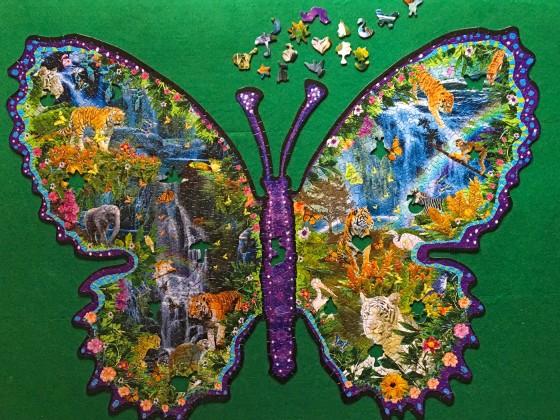 rainforest butterfly2