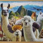 Machu Picchu Lamas, 1000 Teile (Aldi)