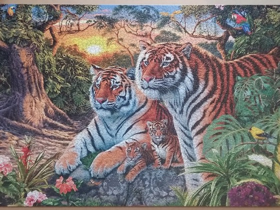 Hidden Tigers by Steve Read ( 2017)  3168 Pieces ( Ravensburger Puzzle )