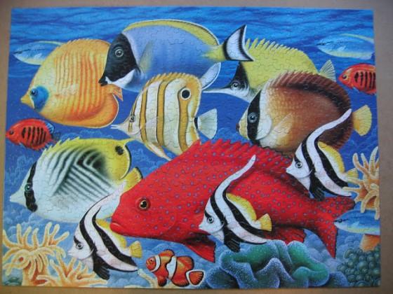 Coral Fish-White Mountain-550