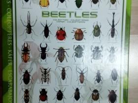 Käfer-Eurographics-1000 Teile