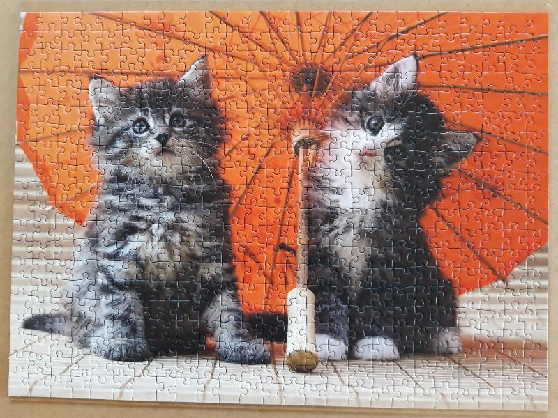 Kätzchen unterm Schirm